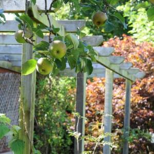 apples garden© www.ice-cream-magazine.com