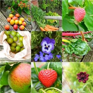 autumn fruits : harvest3x3  pix© www.ice-cream-magazine.com