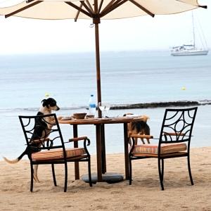 a dogs dinner © www.ice-cream-magazine.com