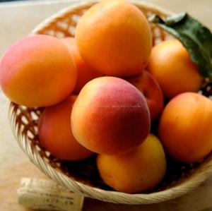 Apricot and ammeretti buttermilk ice cream © www.ice-cream-magazine.com