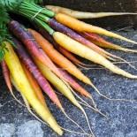 funky heritiage carrots