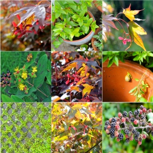 sept 11 autumn