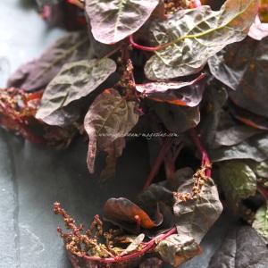 Autumn spinach