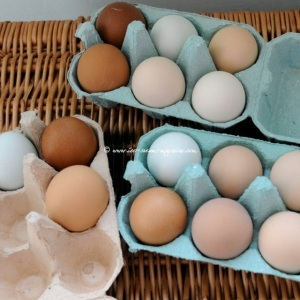 eggs various blue pk