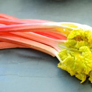 rhubarb icm1
