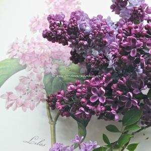lilac © www.ice-cream-magazine.com (4).jpg.