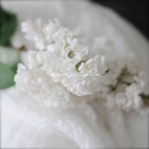 white lilac © www.ice-cream-magazine.com.
