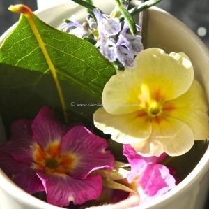 edible flowers in Blood orange coconut fro-yo © www.ice-cream-magazine.com