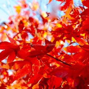 autumn 2015 © www.ice-cream-magazine.com