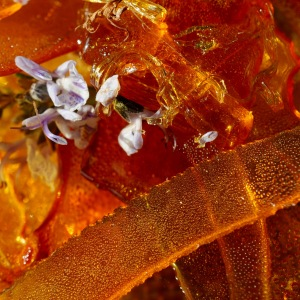 rosemary/date/ caramel custard ice cream © www.ice-cream-magazine.com